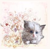 fluffy kitten and roses Royalty Free Stock Photos