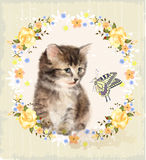 Fluffy kitten, roses and butterfly. Royalty Free Stock Photos