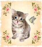 Fluffy kitten with roses and butterfly. Royalty Free Stock Images