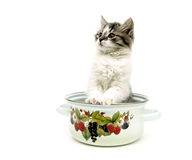 Fluffy kitten sitting in a metal pan isolated over white backgro Royalty Free Stock Photography