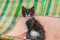 Fluffy kitten sitting in the room . Little kitten-very active, funny animal. The concept of pet care royalty free stock photography