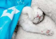 Fluffy kitten sleeping under a blanket Stock Photography