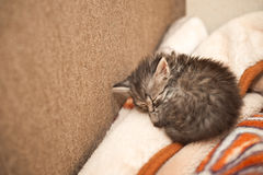 Fluffy kitten. Royalty Free Stock Images