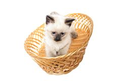 Fluffy kitten  straw basket. White fluffy kitten with blue eyes in  straw basket Royalty Free Stock Image