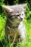 Fluffy kitten in the sun. royalty free stock images