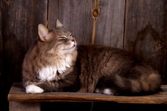 Fluffy kitty. A cute fluffy kitty relaxing on a wood bench stock photo