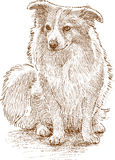 Fluffy lap dog. Vector drawing of a cute toy dog royalty free illustration