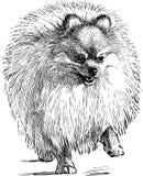 Fluffy lap dog. Vector drawing of a walking funny dog royalty free illustration