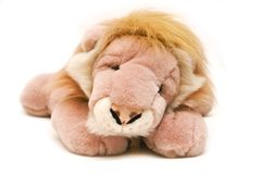 Fluffy lion Stock Photos