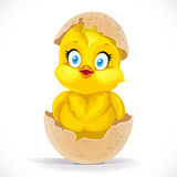 Fluffy little cartoon chick hatched from an egg Stock Image