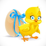 Fluffy little chicken and egg tied with a blue ribbon Royalty Free Stock Images