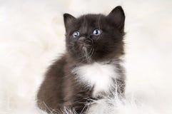 Fluffy little kitten Stock Photo