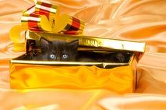 Fluffy little kitten Royalty Free Stock Images