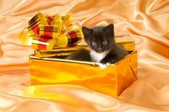 Fluffy little kitten Royalty Free Stock Photo