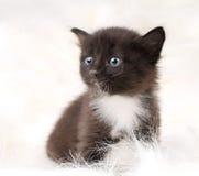 Fluffy little kitten Stock Photos