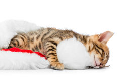 Fluffy little kitten tired after playing Royalty Free Stock Photography