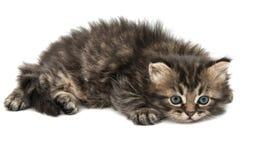 fluffy little kittens stock photo