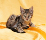 Fluffy little tricolor kitten sitting on yellow Royalty Free Stock Photography