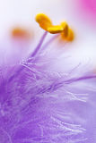 Fluffy 2. Macro shot of purple flower stamens Royalty Free Stock Photography