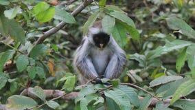 Fluffy monkey. Little fluffy monkey hiding in leaves Stock Images