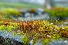 Fluffy moss on stone macro stock photos