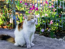 Fluffy multicolored cat sitting on road. Cat has interesting original fur color. Pictured in the photo Cat has interesting original fur color stock photos