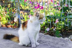 Fluffy multicolored cat sitting on road. Cat has interesting original fur color. Pictured in the photo Cat has interesting original fur color royalty free stock photo