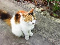 Fluffy multicolored cat sitting on road. Cat has interesting original fur color. Pictured in the photo Cat has interesting original fur color royalty free stock images