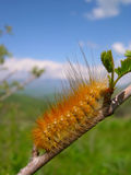 Fluffy orange caterpillar Royalty Free Stock Images