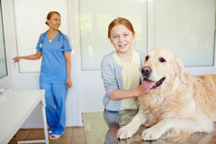 Fluffy patient visiting vet Royalty Free Stock Photo