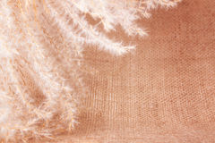 Fluffy Perennial Grass on the Burlap Royalty Free Stock Photography