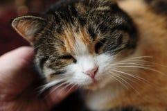 Fluffy pet. Stock Photo