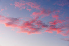 Fluffy pink clouds in blue sky Stock Images
