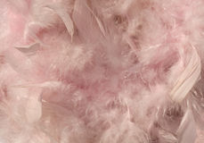 Fluffy pink sunlit feather background Stock Image
