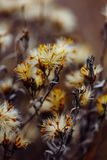 Fluffy plant with dried tiny flowers royalty free stock image