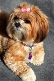 Fluffy Pooch Royalty Free Stock Photos