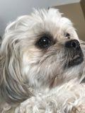 Fluffy puppy Stock Photos