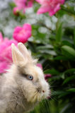 Fluffy Rabbit in the Garden with Flowers Stock Photos
