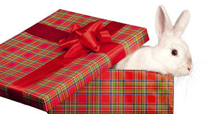Fluffy rabbit in giftbox Stock Photos