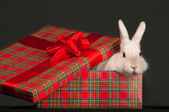 Fluffy rabbit in giftbox Stock Photography