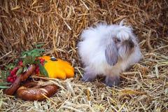Fluffy rabbit sitting in straw Royalty Free Stock Photos