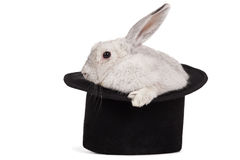 Fluffy rabbit in top hat. Fluffy long-eared rabbit in top hat over white background Royalty Free Stock Image