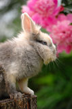 Fluffy Rabbit on Tree Stump Stock Photo
