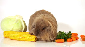 Fluffy rabbit with vegetables on white stock footage
