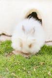 Fluffy rabbits in garden Stock Photos