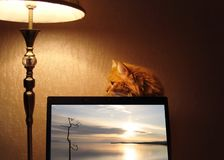 Fluffy red cat sitting behind LCD TV. stock photography