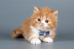 Fluffy red kitten Stock Photos