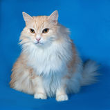 Fluffy red smoky cat sits on blue Royalty Free Stock Photos