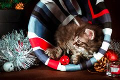Fluffy siberian kitten with Christmas decorations. Brown background.  Stock Photography