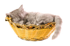 Fluffy small kitten. The beautiful, fluffy, small kitten, sleeps in a basket, on a white background Royalty Free Stock Photography